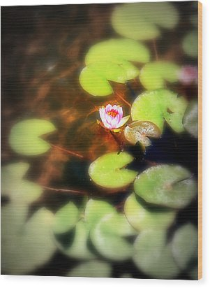 Pond Flower Wood Print by Perry Webster