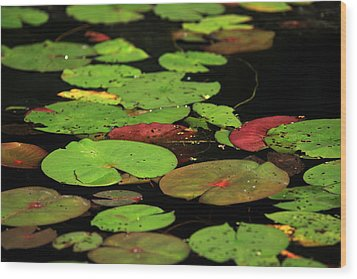 Pond Pads Wood Print by Karol Livote