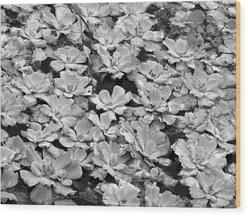 Pond Plants Wood Print by Juergen Roth