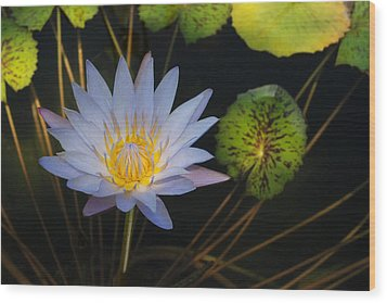 Pond Star Wood Print by Robert Anschutz