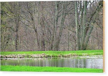 Pond Starts To Grow Wood Print by Debra     Vatalaro