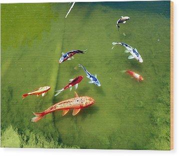 Pond With Koi Fish Wood Print