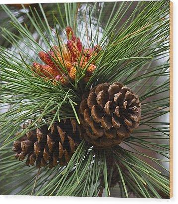 Ponderosa Pine Cones Wood Print by Karon Melillo DeVega
