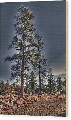 Ponderosa Pines At The Bonito Lava Flow Wood Print