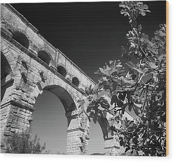 Pont Du Gard And Fig Tree Wood Print by Richard Goodrich