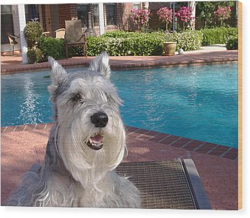 Wood Print featuring the photograph Pooch At Poolside by Diane Ferguson