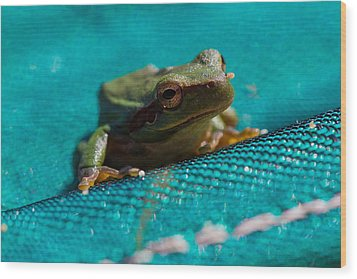 Wood Print featuring the photograph Pool Frog by Richard Patmore