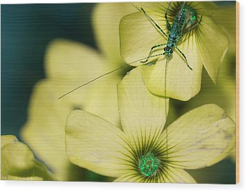 Wood Print featuring the photograph Pop Macro No. 2 by Laura Melis