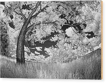 Wood Print featuring the photograph Poplar On The Edge Of A Field by Dan Jurak