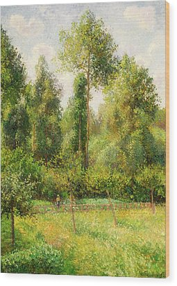 Wood Print featuring the painting Poplars - Eragny by Camille Pissaro