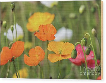 Wood Print featuring the photograph  Poppies 1 by Werner Padarin