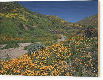 Wood Print featuring the photograph Poppies Along Riverbed by Cliff Wassmann
