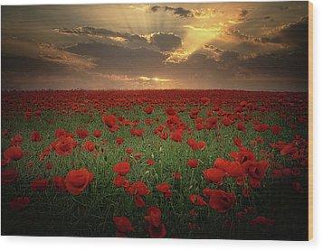 Poppies At Sunset Wood Print by Albena Markova