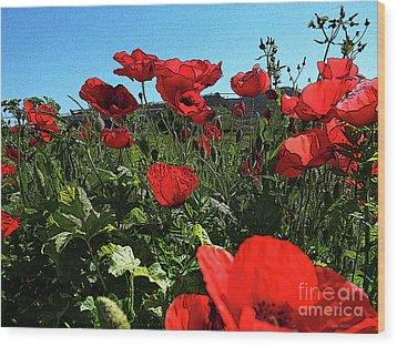 Poppies. Wood Print by Don Pedro De Gracia
