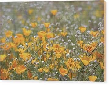 Wood Print featuring the photograph Poppies Fields Forever  by Saija Lehtonen