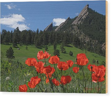 Poppies Flatirons Wood Print