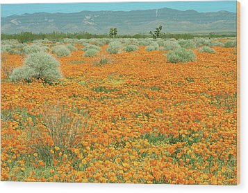 Wood Print featuring the photograph Poppies For Ever - Poppy Fields Mohave Desert California by Ram Vasudev