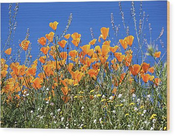 Wood Print featuring the photograph Poppies From Below by Cliff Wassmann