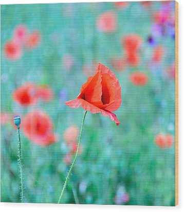 Wood Print featuring the photograph Poppies In A Field by Marion McCristall