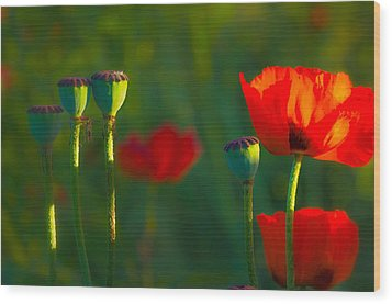 Poppies In Evening Light Wood Print by Joan Herwig