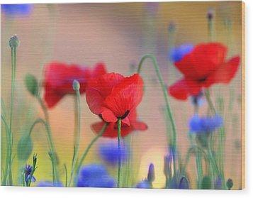 Poppies In Spring  Wood Print