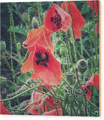 Wood Print featuring the photograph Poppies by Karen Stahlros