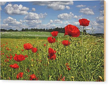 Poppies Wood Print by Ken Brannen