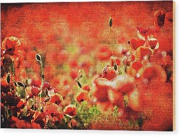 Poppies Wood Print by Meirion Matthias