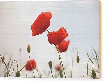 Poppies Wood Print by Olivia Bell Photography
