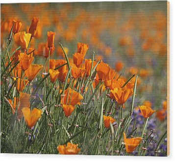 Poppies Wood Print by Patrick Witz