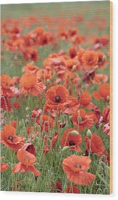 Poppies Wood Print by Phil Crean