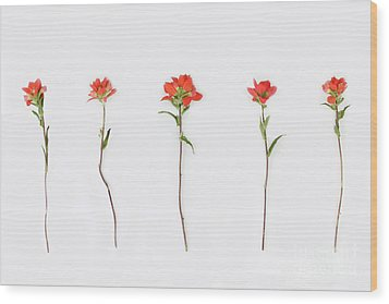 Poppy Blossoms Wood Print by Brittany Bevis