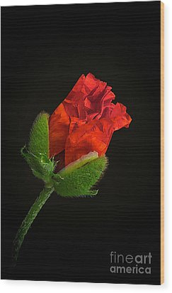 Poppy Bud Wood Print by Toni Chanelle Paisley