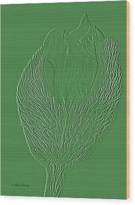 Poppy Embossing  Wood Print by Chris Berry