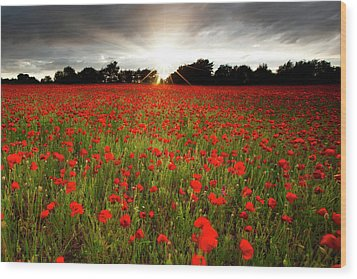 Poppy Field At Sunset Wood Print by Doug Chinnery