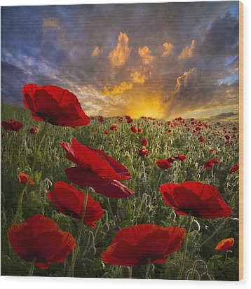 Poppy Field Wood Print by Debra and Dave Vanderlaan