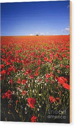 Poppy Field Wood Print by Meirion Matthias