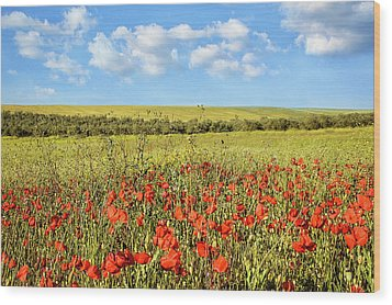 Wood Print featuring the photograph Poppy Fields by Marion McCristall