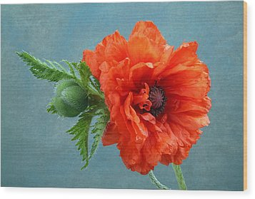 Poppy Flower Wood Print