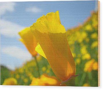 Poppy Flowers Meadow 3 Sunny Day Art Blue Sky Landscape Wood Print by Baslee Troutman