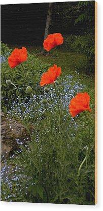 Poppy Foursome Wood Print by Renate Nadi Wesley