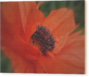 Poppy Love Wood Print by Martin Morehead