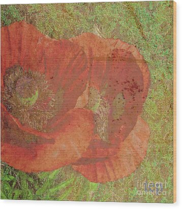 Wood Print featuring the photograph Poppy Love by Traci Cottingham