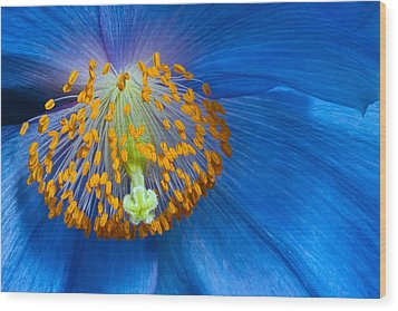 Poppy Wood Print by Margaret Barry