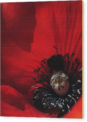 Poppy No. 2 Wood Print by The Forests Edge Photography - Diane Sandoval
