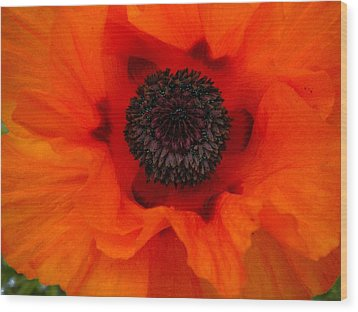 Wood Print featuring the painting Poppy by Renate Nadi Wesley
