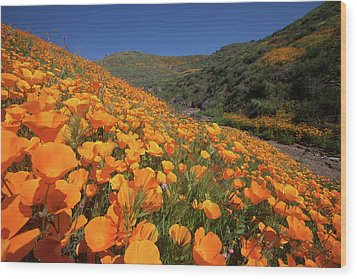 Wood Print featuring the photograph Poppy Superbloom by Cliff Wassmann