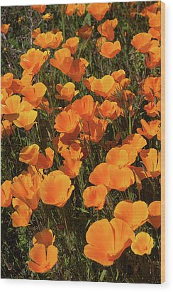 Wood Print featuring the photograph Poppy Superbloom Close Up by Cliff Wassmann