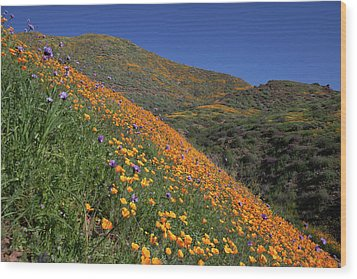 Wood Print featuring the photograph Poppy Superbloom On Hillside by Cliff Wassmann