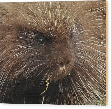 Wood Print featuring the photograph Porcupine by Glenn Gordon